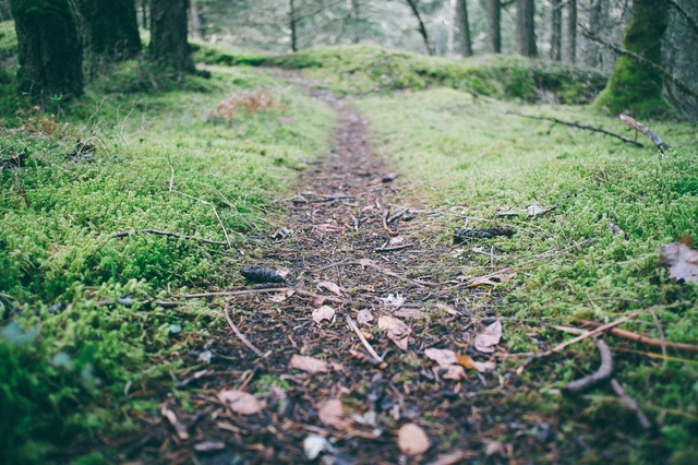 forest-trees-path-moss
