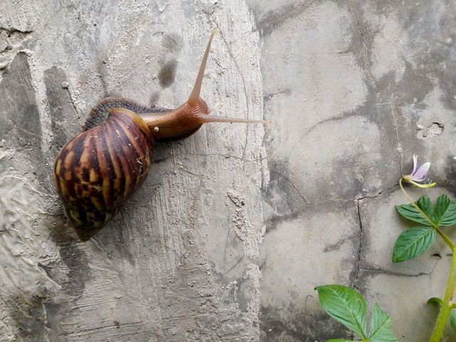 snailpexels-photo-67724