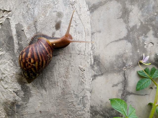 snailpexels-photo-67724