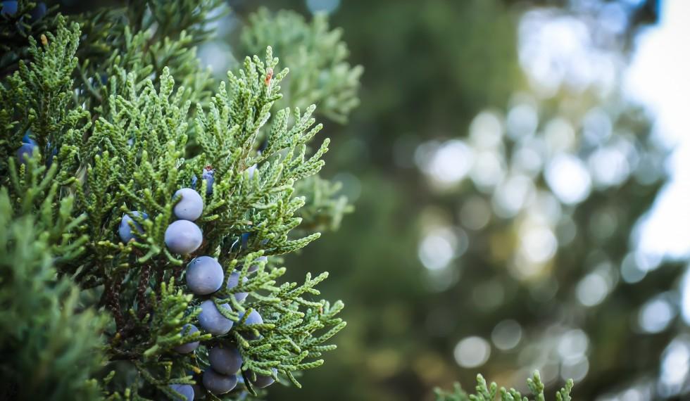juniper steve richey